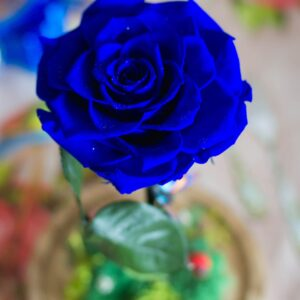 trandafir-criogenat-in-cupola-albastru.jpg