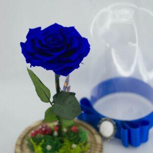 trandafiri-in-cupola-de-sticla